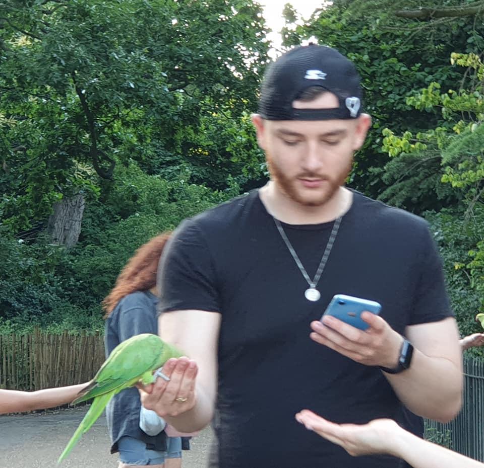 Parrots in Hyde Park