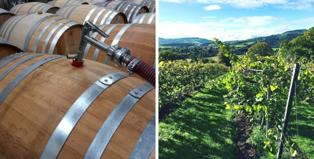 Vineyards in England that offer wine tasting tours 7