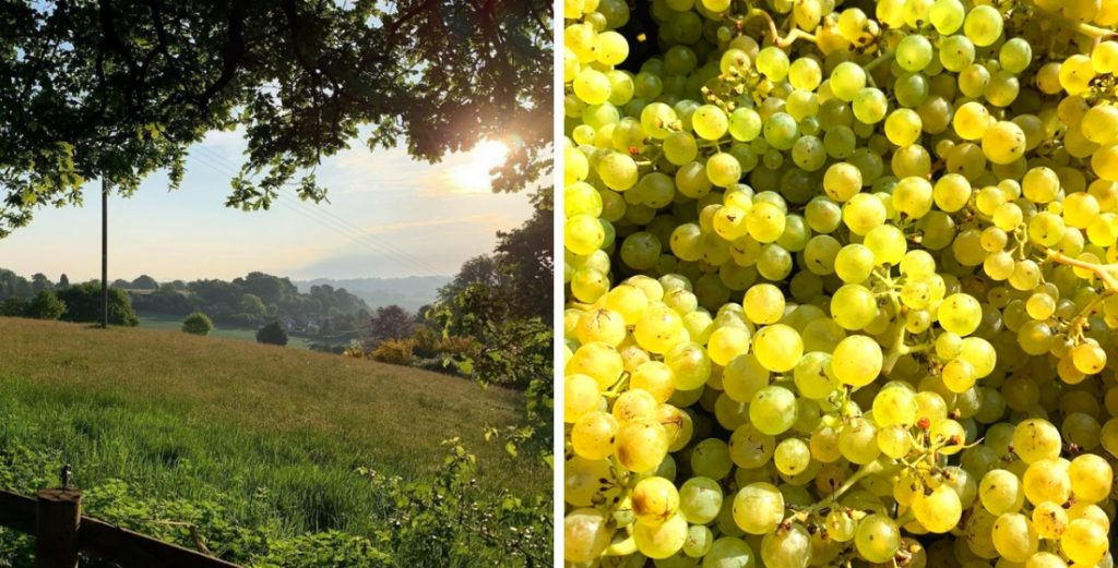 Vineyards in England that offer wine tasting tours 3