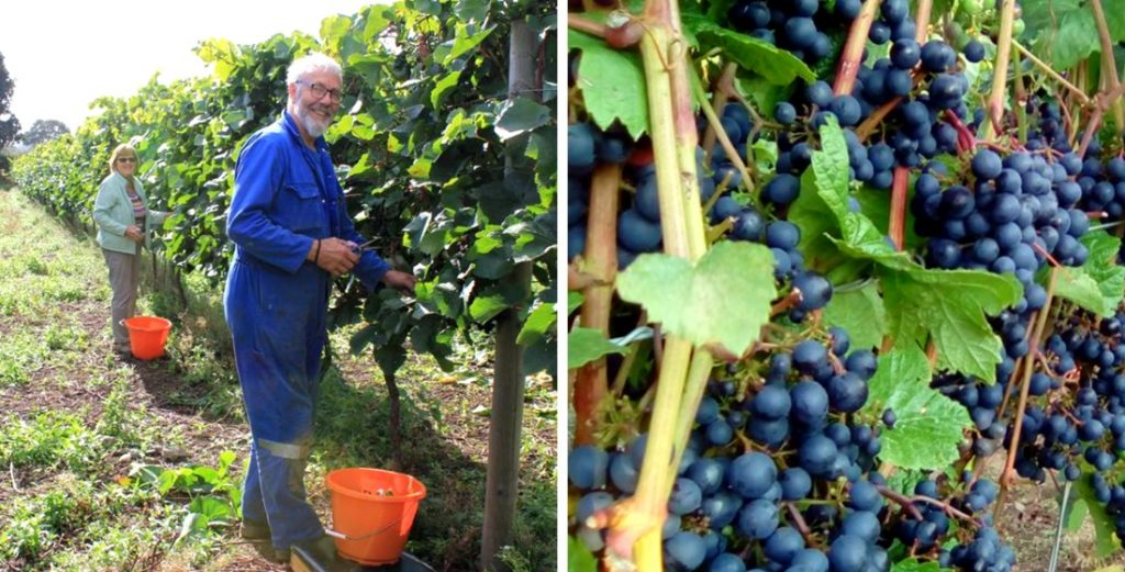 Vineyards in England that offer wine tasting tours 6
